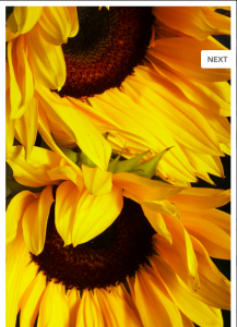 Sunflower Greeting Cards - Perfect Thank You Notes